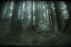 Woods_Dawn
